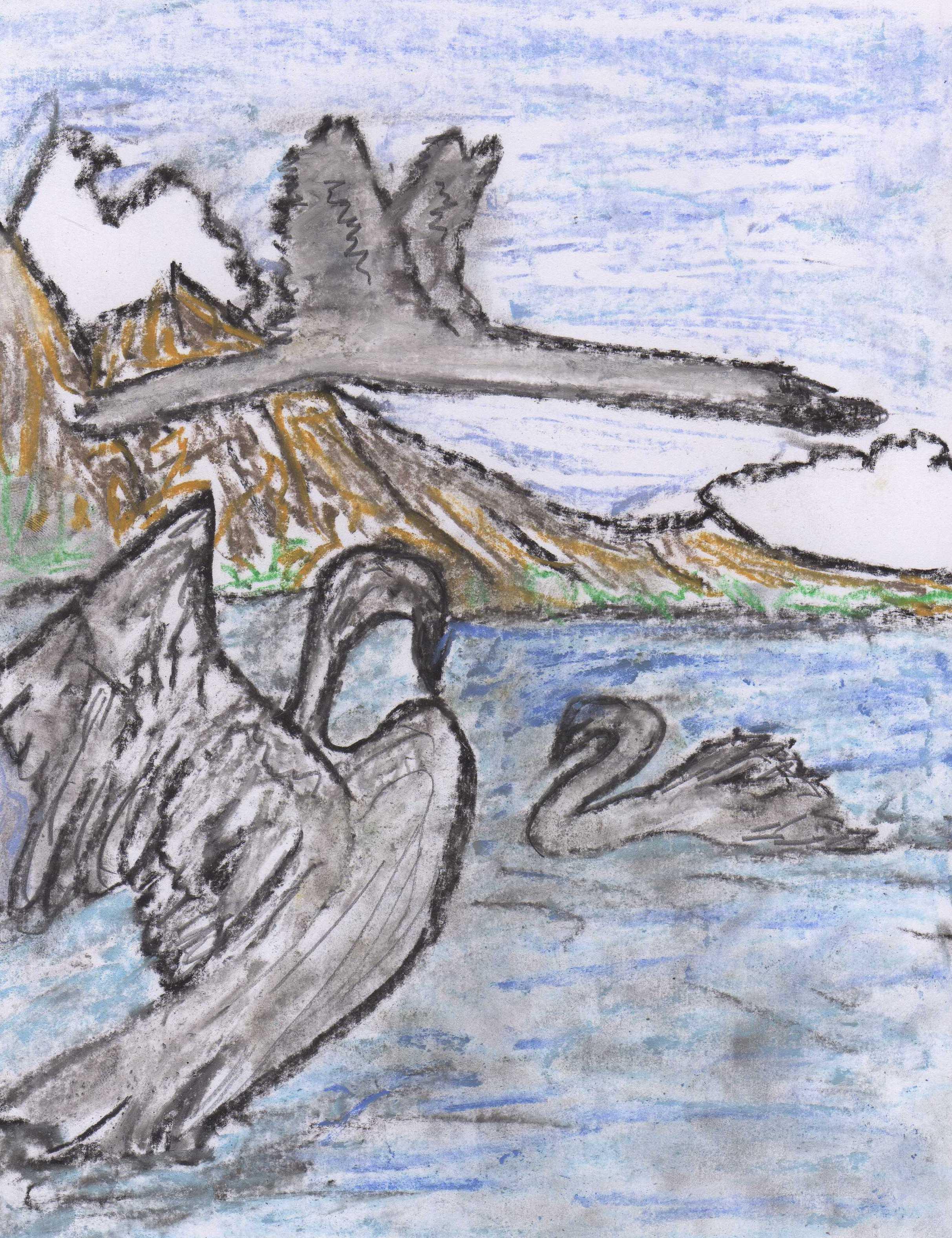 grey swans
