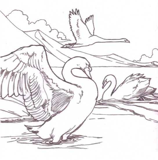 swans 03 flipped
