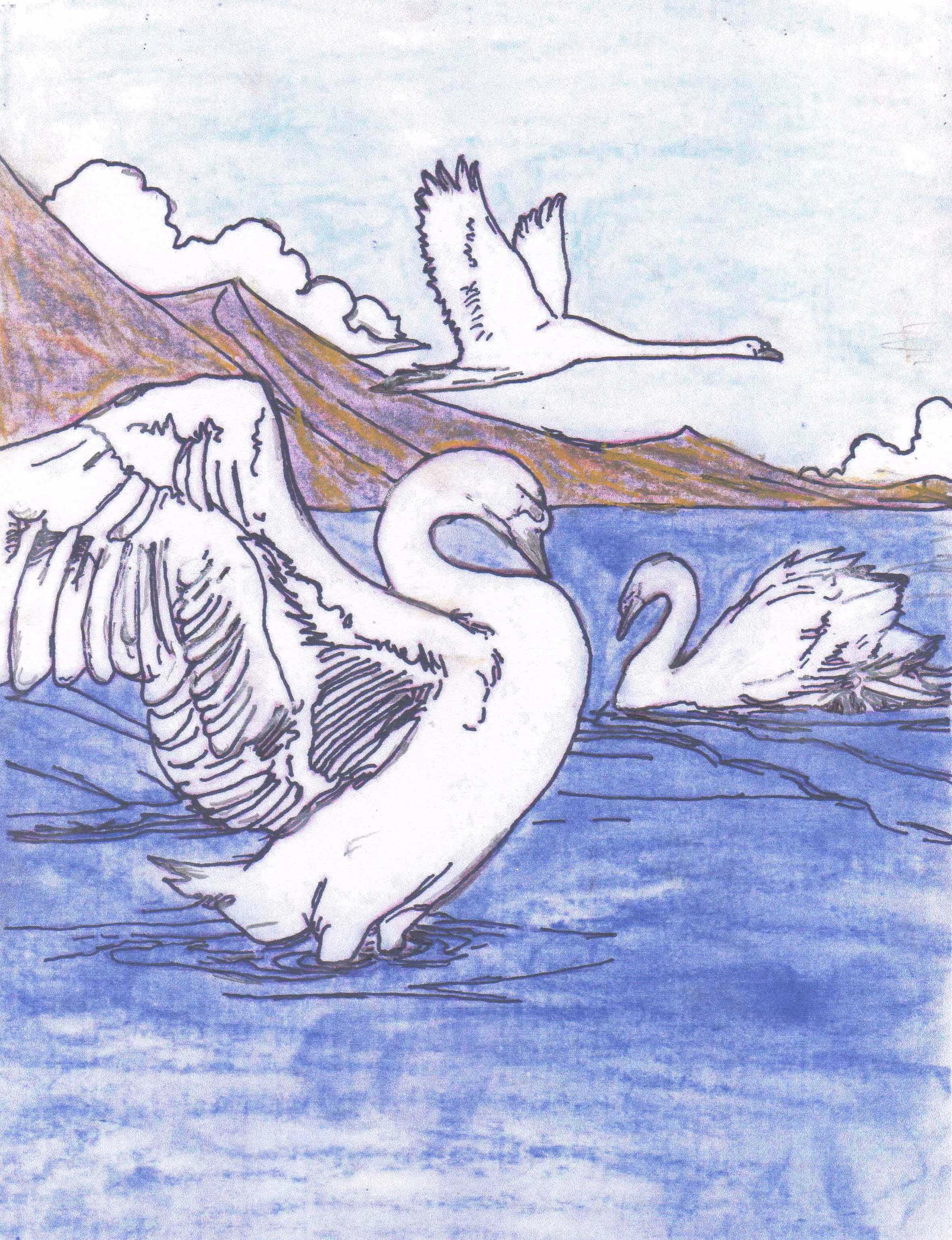 swans final