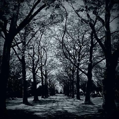 em-woods