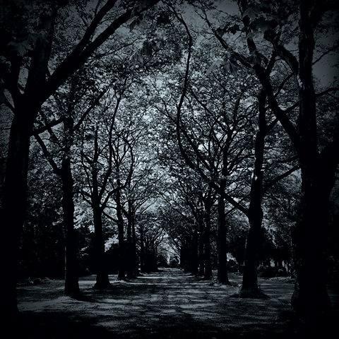 em-woods-darkened