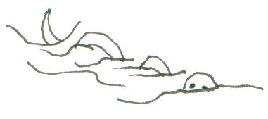 snake-003b