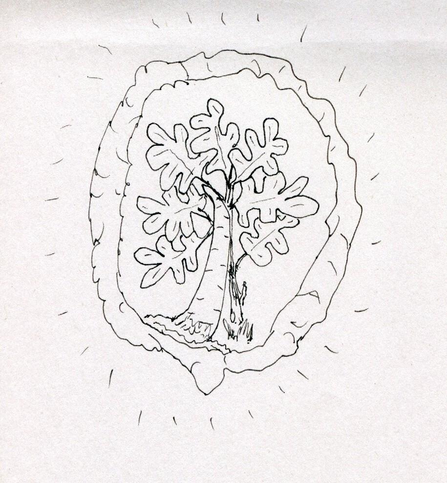 oak horn 001.jpg