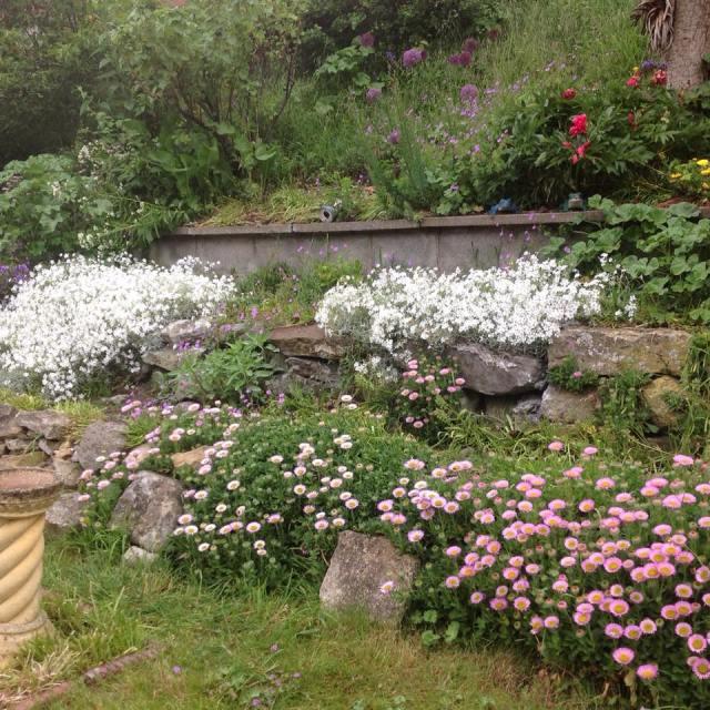 mums garden.jpg