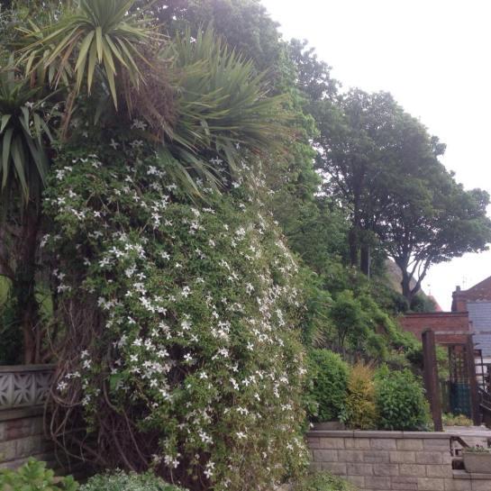 neighbours garden.jpg
